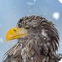 Rychlý tip: Realistický padající sníh